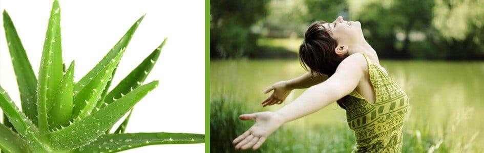 L'aloé vera, nature et vertus