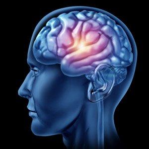cerveau-la betterave