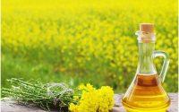 Huile de moutarde, 8 avantages plus comment l'utiliser