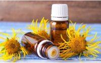 Huile essentielle d'inula odorante